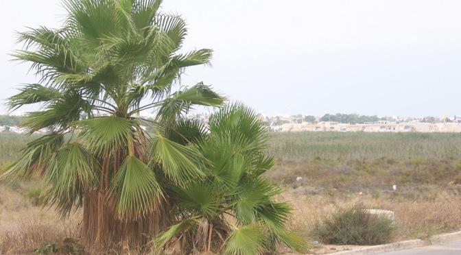 Titelbeitrag 3 – Die Palme